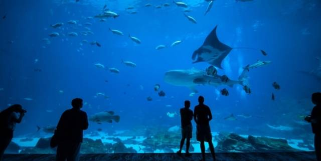 World Oceans Day At Galway Atlantaquaria This Sunday