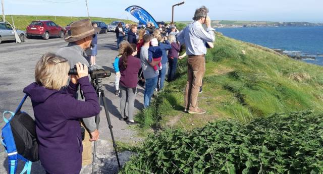 Whale Watch Ireland 2019: Next Saturday 24th August