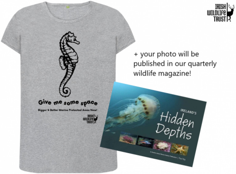 The photograph with the most 'likes' will be announced on July 8th and sent a marine themed t-shirtand a copy of 'Ireland's Hidden Depths' by Paul Kay