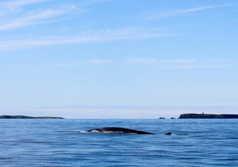 The fin whale seen in Donegal Bay on 8 August