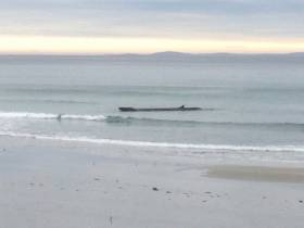 The large baleen whale spotted on Cross Beach at the weekend