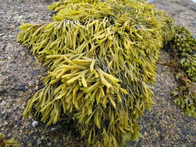 State Cannot Licence Seaweed Harvesting Where Rights Already Exists Says English