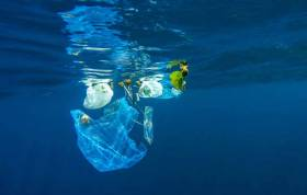 Plastic pollution is affecting marine life in even the most remote parts of the Atlantic Ocean