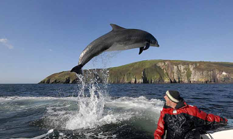 The great Dingle dolphin Fungie in flying form – his many friends worldwide are concerned that their waterborne rockstar is becoming gloomy in his enforced isolation