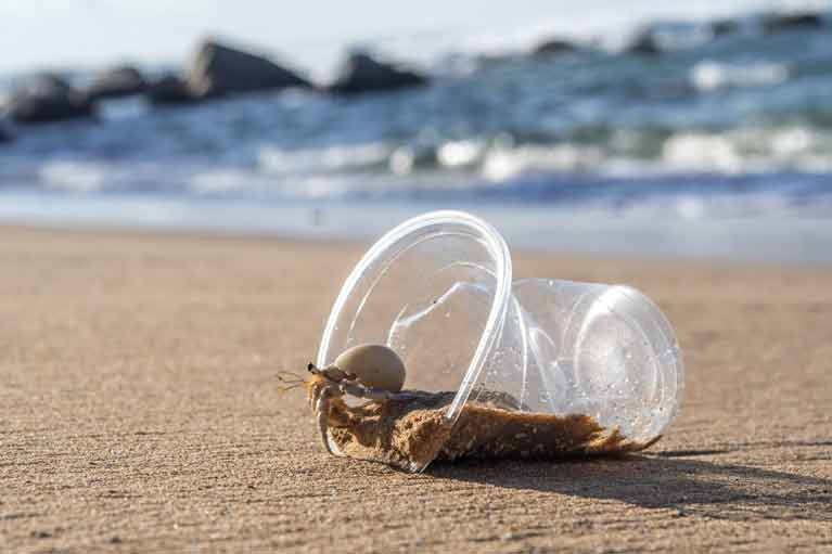 Marine Life Impacted by Plastic Pollution New Research Shows