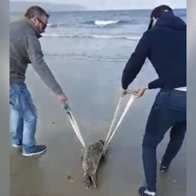 Beachgoers Rescue Seal Pup From Co Down Strand