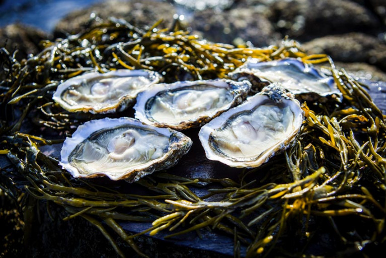 Lough Foyle Oyster Fishery Licence Applications Now Open