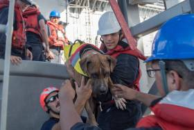 One of the two dogs rescued along with their owners from a small sailing yacht that had been adrift for months in the western Pacific