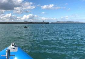 Dolphins playing inside Dun Laoghaire Harbour. It does the heart good