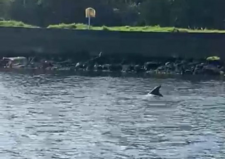 The fin of what's believed to be a bottlenose dolphin spotted west of Drogheda town centre on Thursday morning 22 April