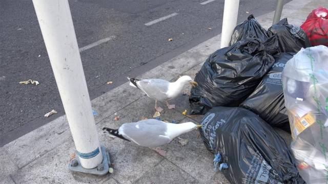 Pest Control Firm Warns Over Dangers Of Seagulls In Summer Months