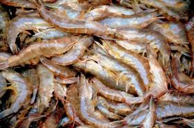 Marine Minister Launches New Scheme To Reduce Juvenile Fish Discards
