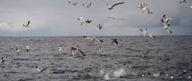Seabird activity can tell sailors a lot