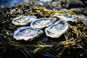 Galway Hosts Shellfish Safety Conference This May