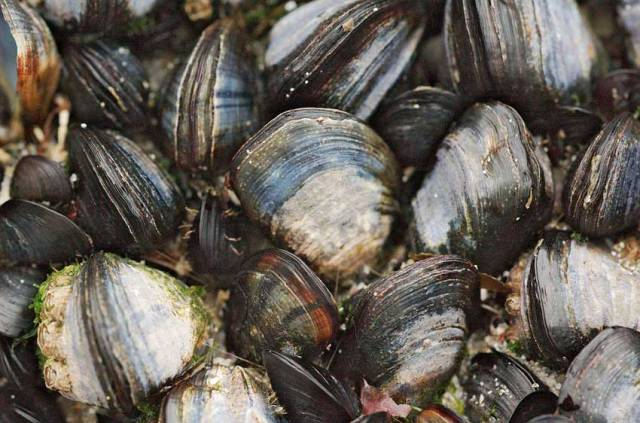 Marine Institute Leads New Project In Predicting Shellfish Safety
