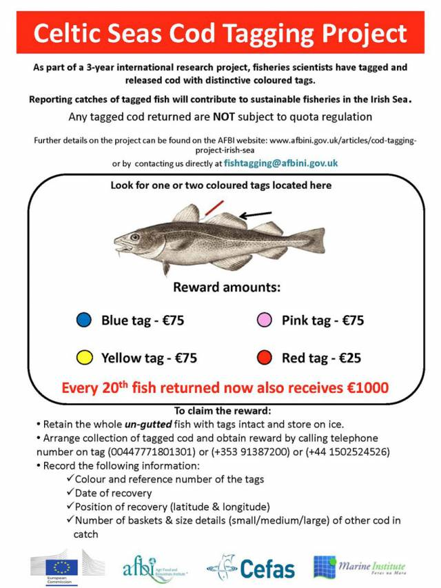 Christmas Bonus In Rewards For Reporting Tagged Irish Sea Cod