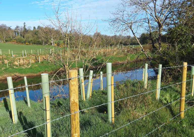 Native tree planting to support fishery habitats in Northern Ireland
