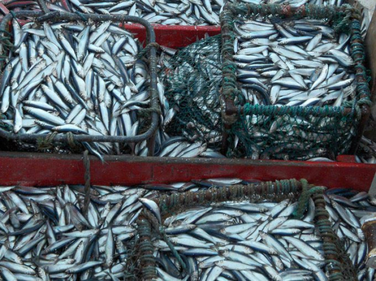 Irish Industry Organisations Question Methodology for 'Overfishing' Report