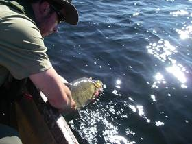 A Roach/Bream hybrid is released during the Lough Ree survey in spring 2014